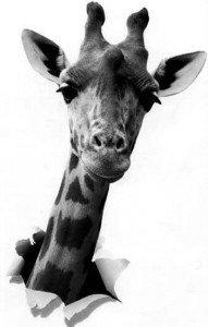 girafe-sort-du-papier